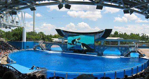 An Orca whale interacts with a trainer during a show at Shamu Stadium, and can be seen on wide LCD screens.