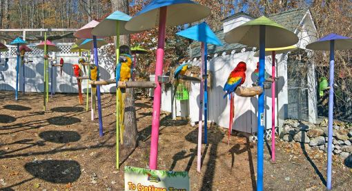 Parrots from rain forests can be seen perched along pathways and in house cages at the Parrot Mountain aviary.