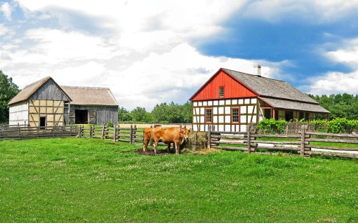 An 1870's German farm house with a working cattle farm, pigs, chickens, and garden.