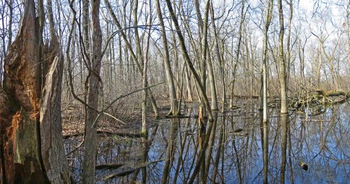 This freshwater swamp forest was photographed in Whitnall Park in Milwaukee, Wisconsin.