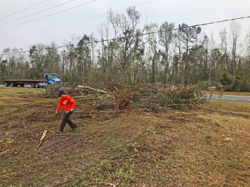 Two large piles of tree damage