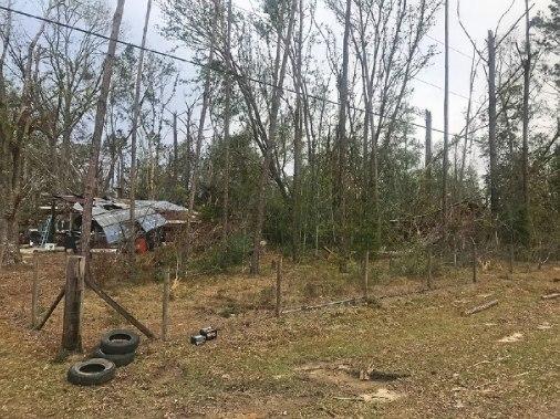 Piles of tree damage