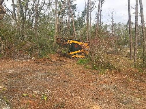 Removing tree piles